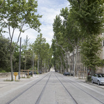 Platanes boulevard Henri iv