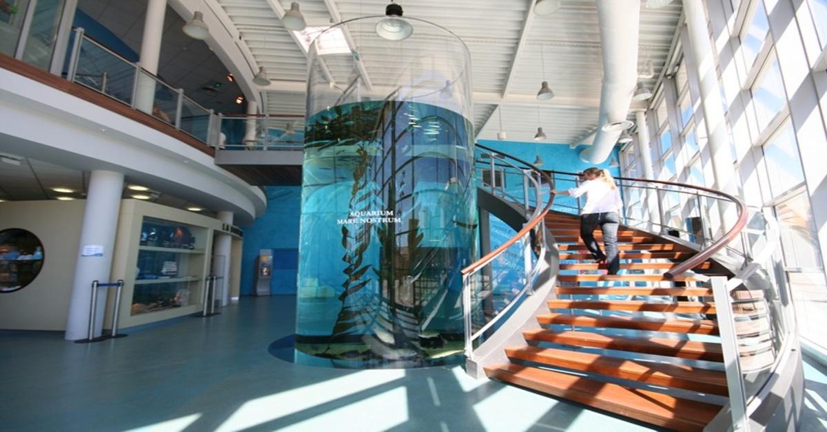 Aquarium mare nostrum montpellier m diterran e m tropole - Bassin rectangulaire m montpellier ...