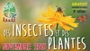 Des insectes et des plantes