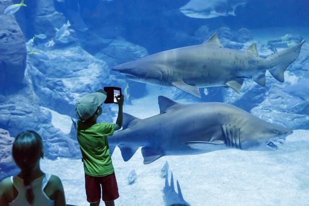 Aquarium Mare Nostrum