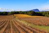 Vignes et Pic Saint-Loup